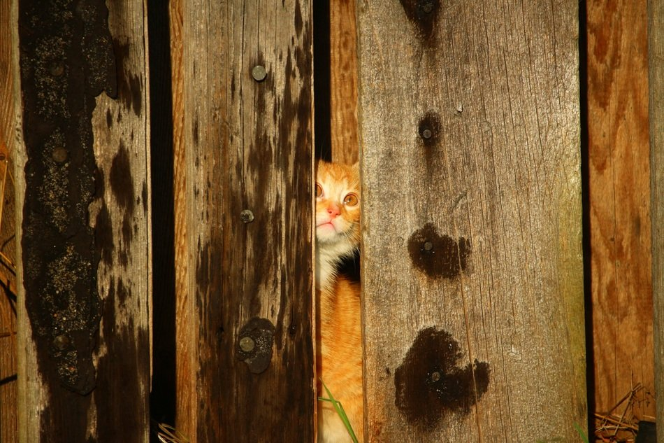 young cat hiding in the wooden wall