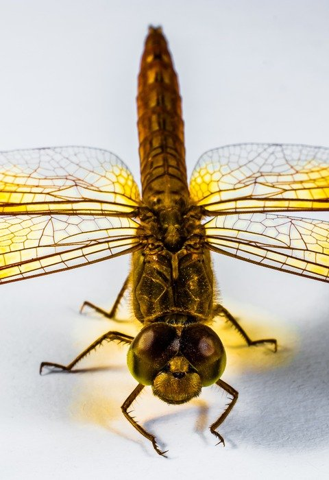 closeup of a yellow dragonfly on the white background