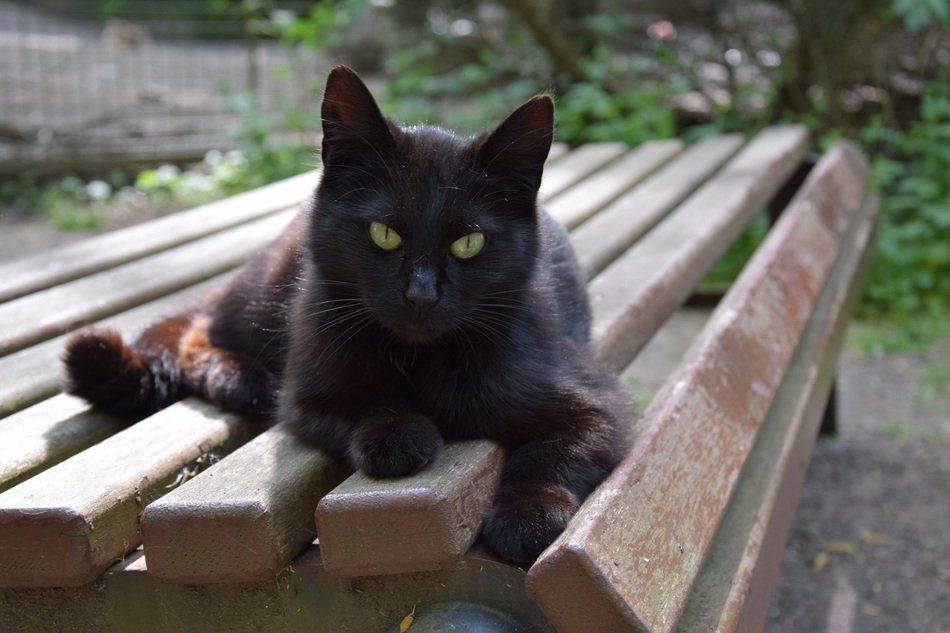 black cat on a bench close up