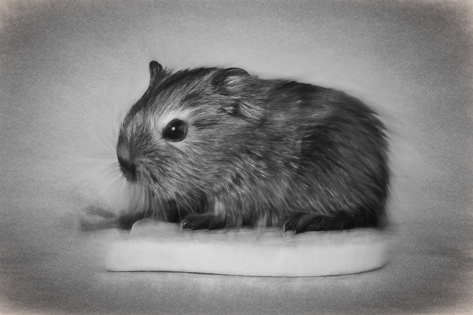 Charming Guinea Pig Drawing Free Image