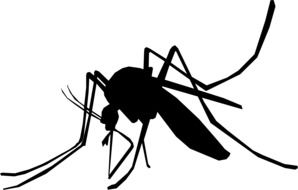 black silhouette of a mosquito