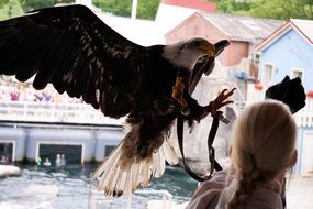huge eagle with dangerous claws