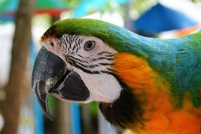 macaw parrot head closeup