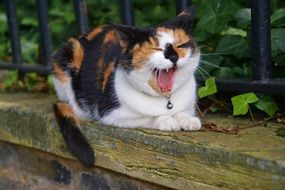 cute lovely Cat Yawning