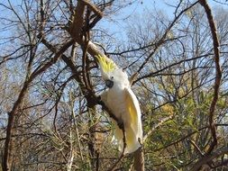 white-yellow parrot sits on a branch