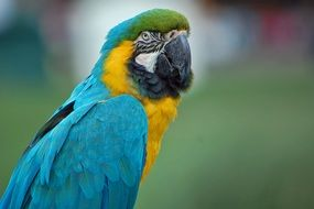 colorful macaw parrot on a blurred background