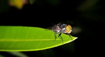 Fly on the green leaf at night