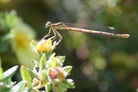 dragonfly near a green plant in nature