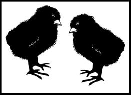 drawing of two black chicks