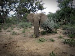 cute lovely Namibia Elephant