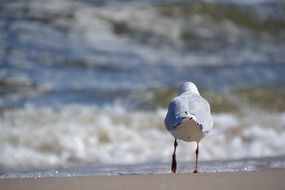 seagull walking on the beach