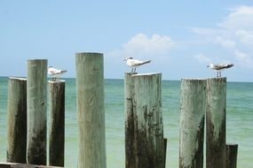 seagulls on wooden posts on the beach