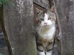sleepy domestic cat stands at the fence