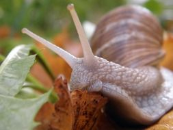 Snail on the leaves