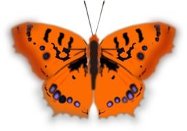 painted orange butterfly with black spots