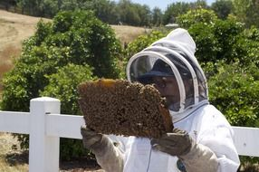 beekeeping at the farm