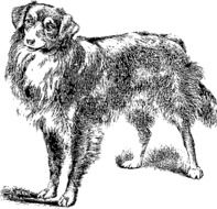 Ä°llustration of Domestic canine