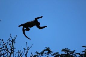 Howler monkey outdoors