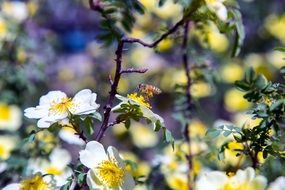 Bees pollinate the flowers on the tree