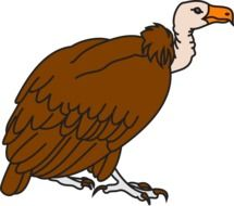 painted brown vulture