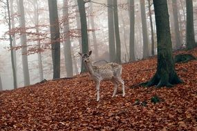 Roe deer in the forest in autumn