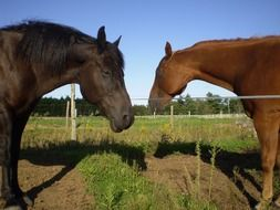 thoroughbred horses on a farm