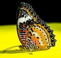 charming butterfly on the yellow surface