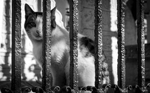 cute Cat Animal behind fence