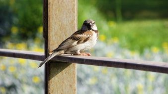 sparrow sitting on a wooden plank