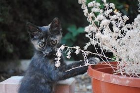 cute Cat Doing Gardening
