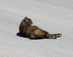black lazy cat resting on the road