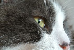 photo of a cat with green eyes close up