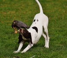 dog and bird of prey in the wildpark poing