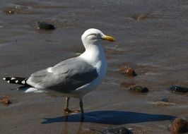 white and grey Seagull on Baltic Sea Coast