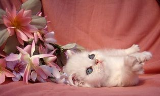 the kitten lies near the flowers on the couch
