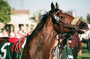 Thoroughbred Racehorse
