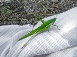 green grasshopper on the white fabric