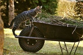 cat on a cart with green grass