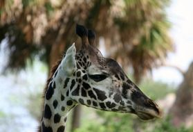 young giraffe with long neck