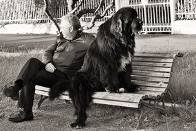 dog and man on the bench