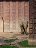 elephant stands near the wall