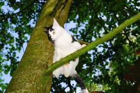black and white young cat on the tree