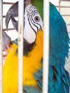 bright multi-colored parrot in a cage