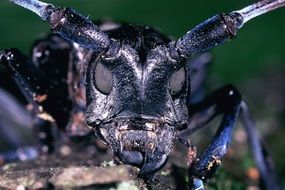 asian beetle closeup