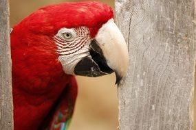 Color Exotic Parrot
