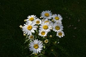field daisies in a bouquet