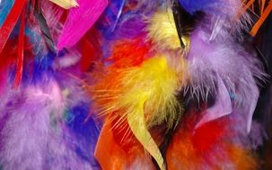 colorful feathers for carnival