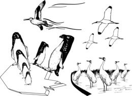 Penguins and other wild Birds, black and white drawing