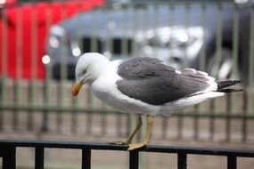 perched on handrails seagull