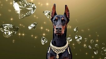 doberman among diamonds